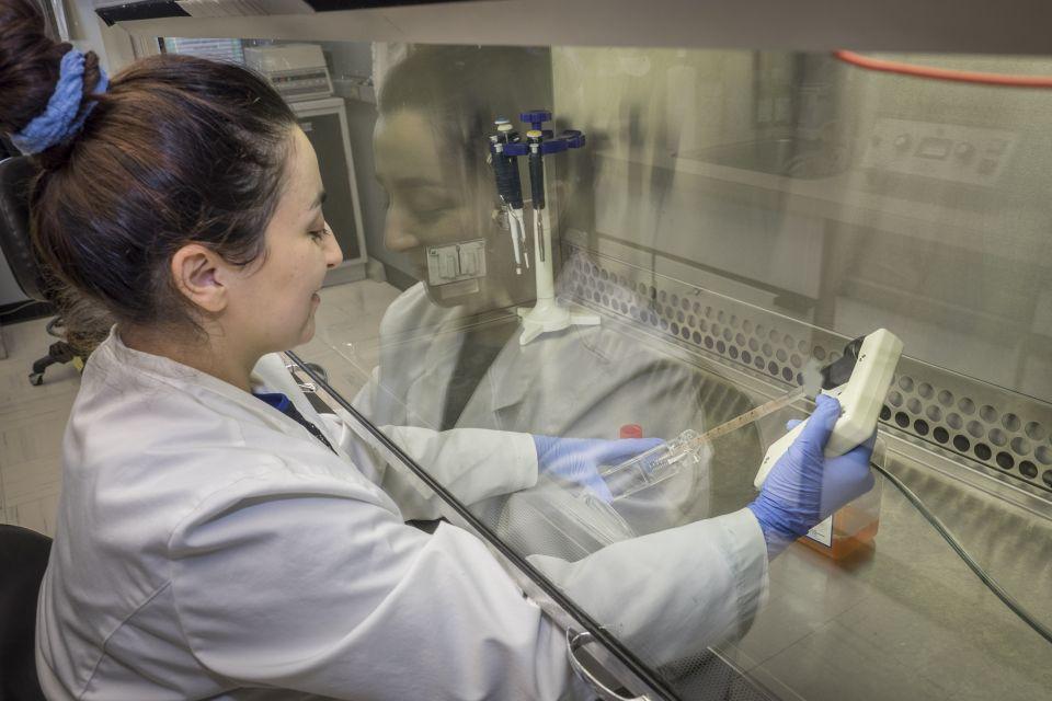 centre de recherche sur le vieillissement  u0026gt  details des laboratoires  u0026gt  laboratoire de stress